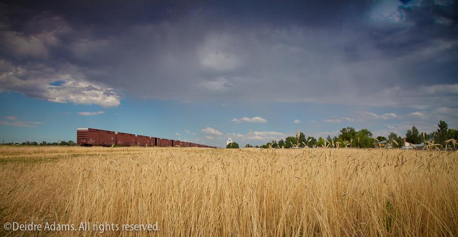 Deidre Adams - Bennett Landscape